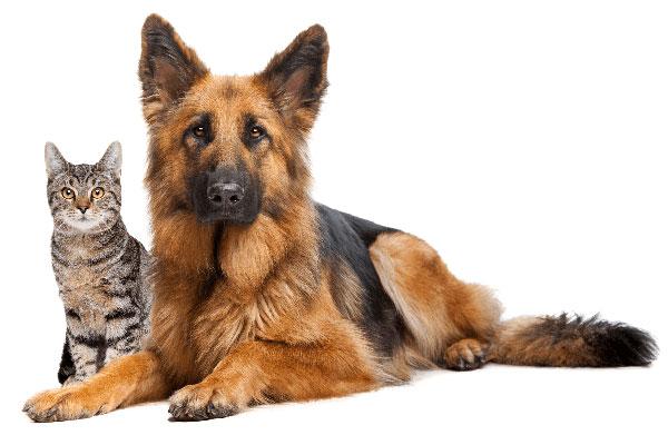 DRIP CBD for Pets